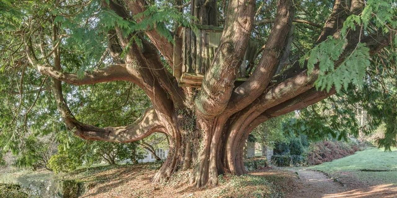Devon manor house tree house