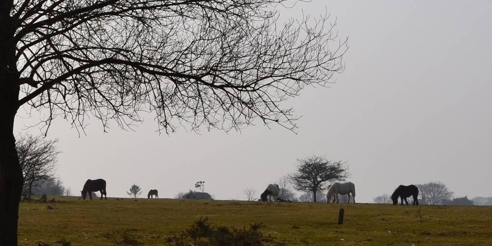 Dartmoorn National Park landscape